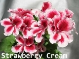 PAC Candy Flowers Strawberry Cream